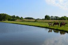 Summer at the lake, Poland