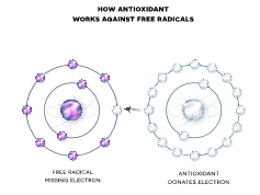 How Antioxidants work against free radicals