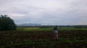 lahan petani