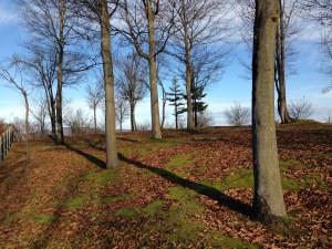 響きの森公園