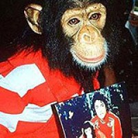 Bubbles: El mono heredero de Michael Jackson recibió dos millones de dólares