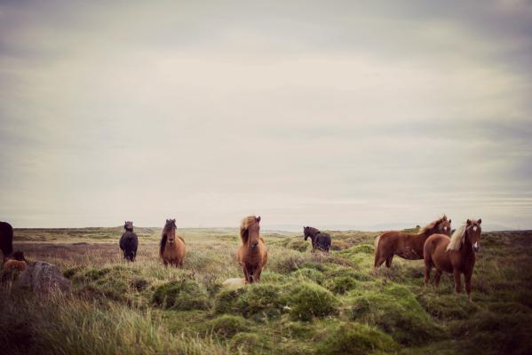 Was Du lernen kannst von Pferden