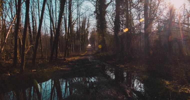 Blogwandeling Bellevuebos: 3 redenen om in groep te wandelen