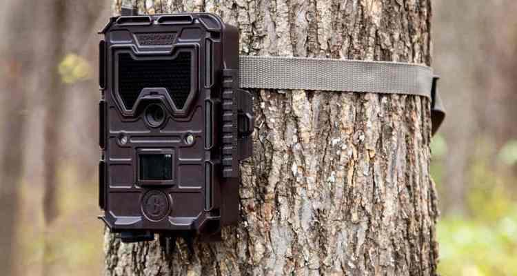 cámaras de fototrampeo