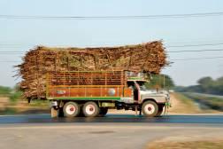 Tailandia caña azúcar