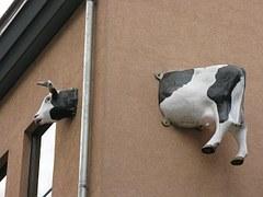 cow-9924__180
