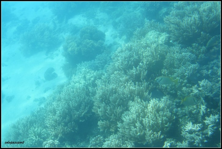 Scuba diving at Great Barrier Reef (Cairns)