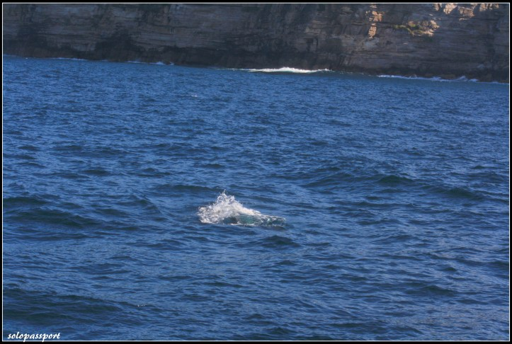 Whale watching 2015