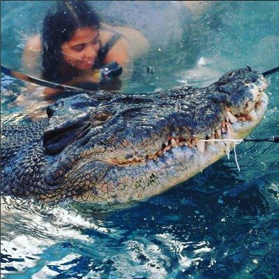 Cage dive with crocodile