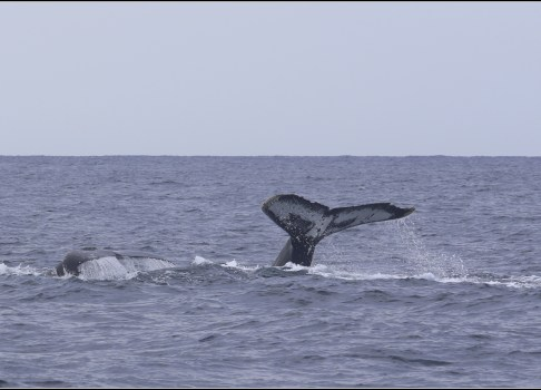 Whale watching – 2017