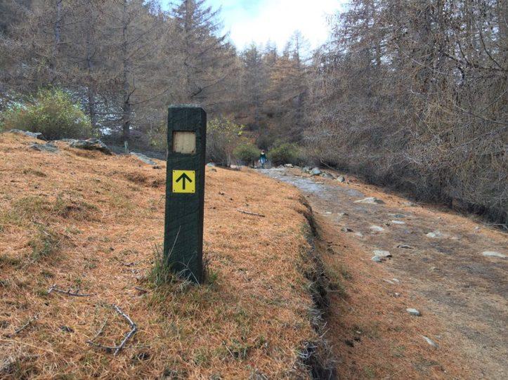 Guide | Mt John - South Summit Walk