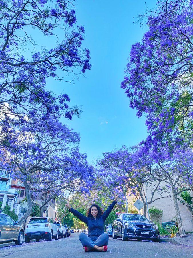 Jacarandas season in Sydney