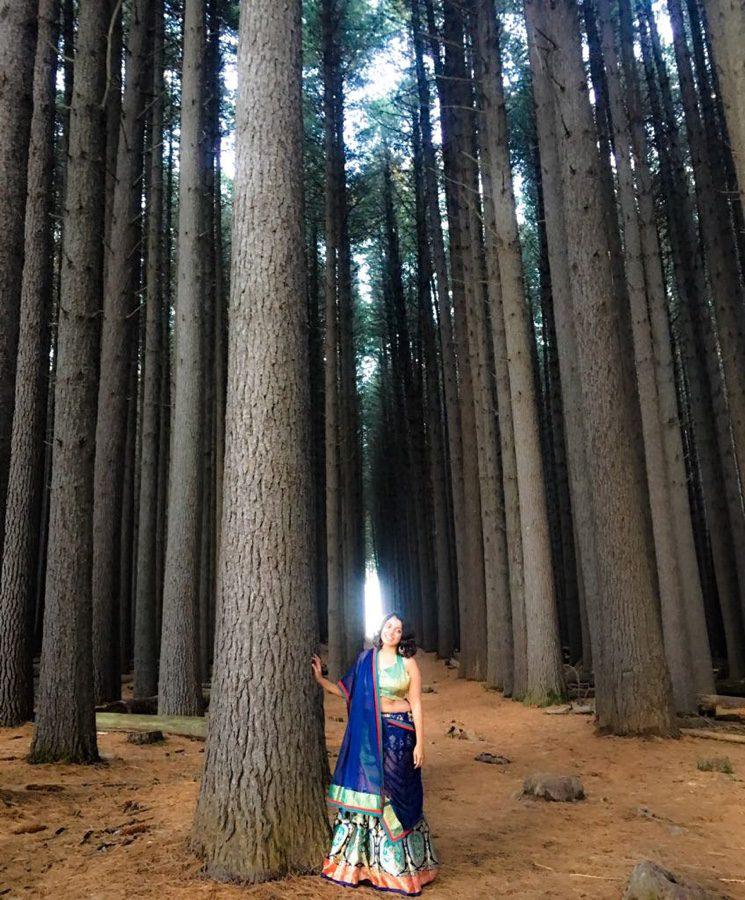 Sugar Pine Walk