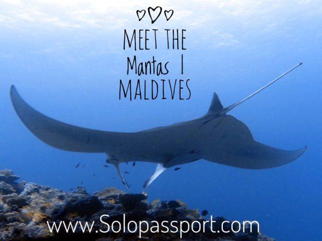 Meet the Mantas in Maldives