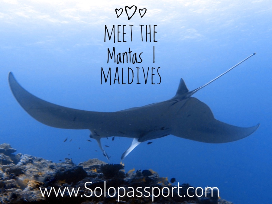 Meet the Mantas in Maldives
