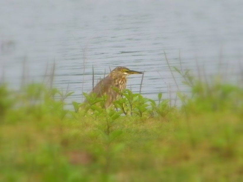 Bird watching at Kanva Reservoir