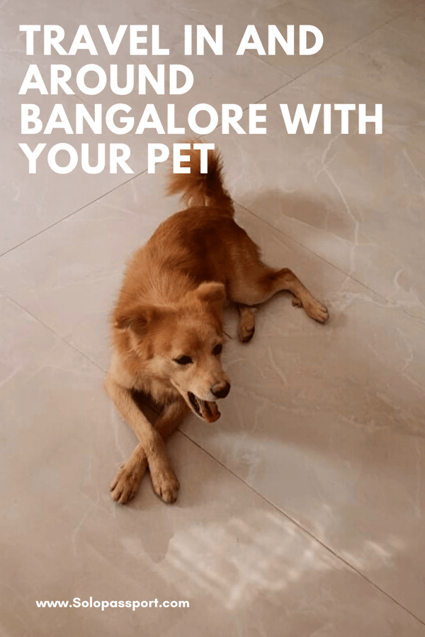 PIN for later reference - Travel in and around with your fur baby