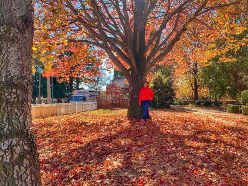 Autumn in Bowral