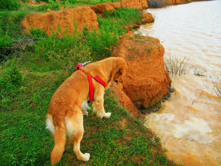Willie at Bagaluru lake