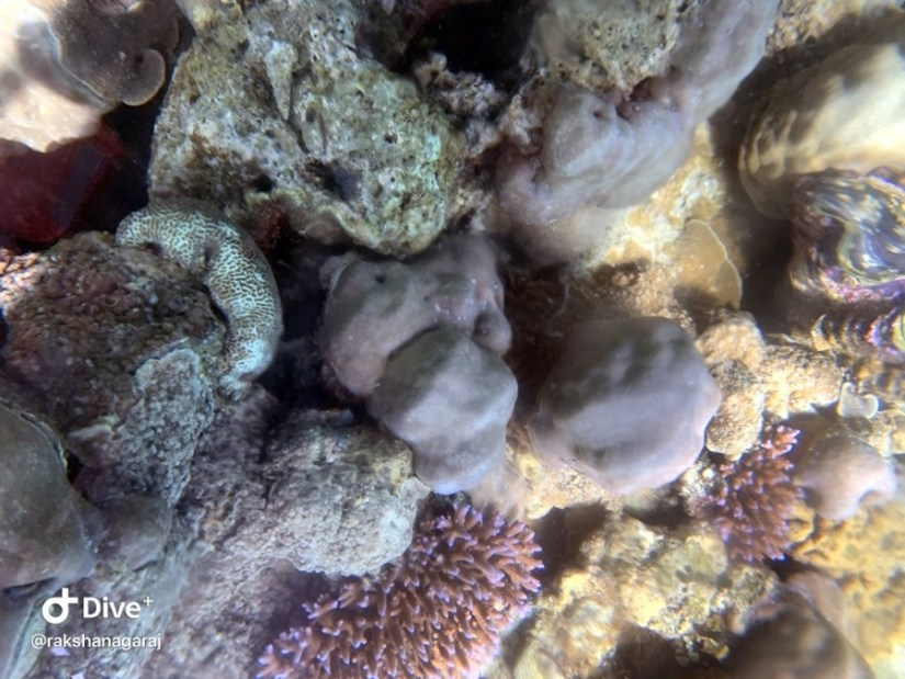 Corals seen from glass bottom boat, Jolly Buoy Island