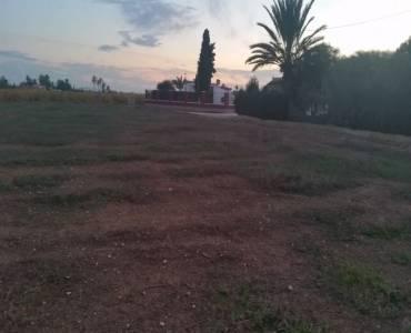 Elche,Alicante,España,Lotes-Terrenos,33968