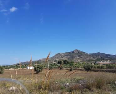 Sax,Alicante,España,Parcela,34284