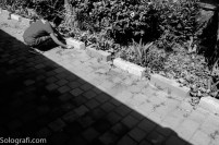 snapshot-5