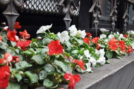 Flowers in Window Sill Along Lexington Ave., New York City