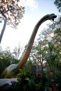 Brachiosaurus - Source: Lowry Park Zoo