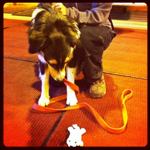 """""""Let's Play!"""" Cottonelle Puppy Meets Flash the Rescue Dog"""