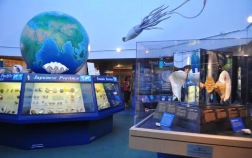 The Bailey-Matthews Shell Museum, Sanibel Island, Fla.