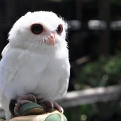Press Release: Peace River Wildlife Center Hosting Family-Friendly Fundraiser Aug. 21, 2021