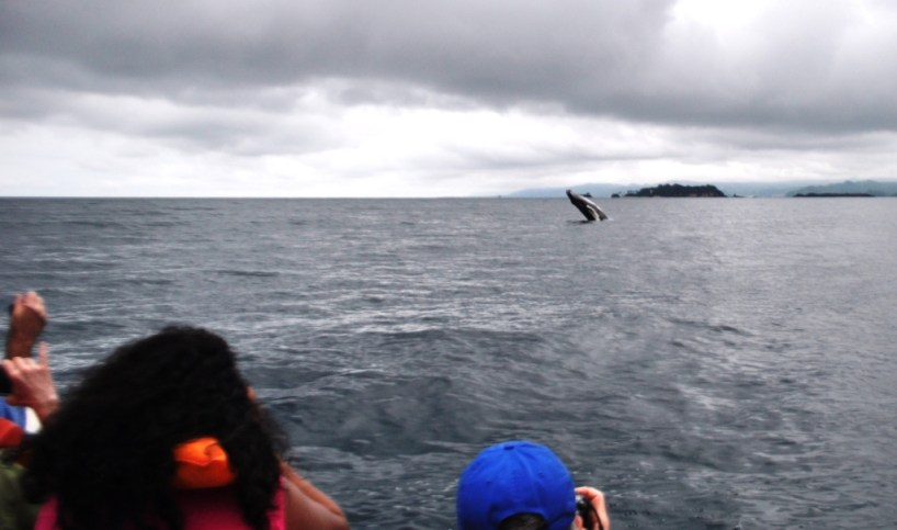 Humpback Whale Watching on a Smaller Boat in Samaná Bay, Dominican Republic, March 2014