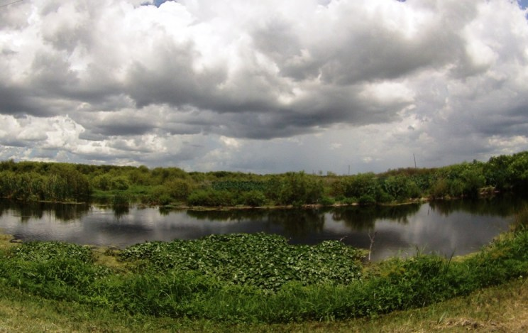 Lush greener, clear water and Florida's mountains (the clouds) at Lake Apopka, Fla., May 31, 2015