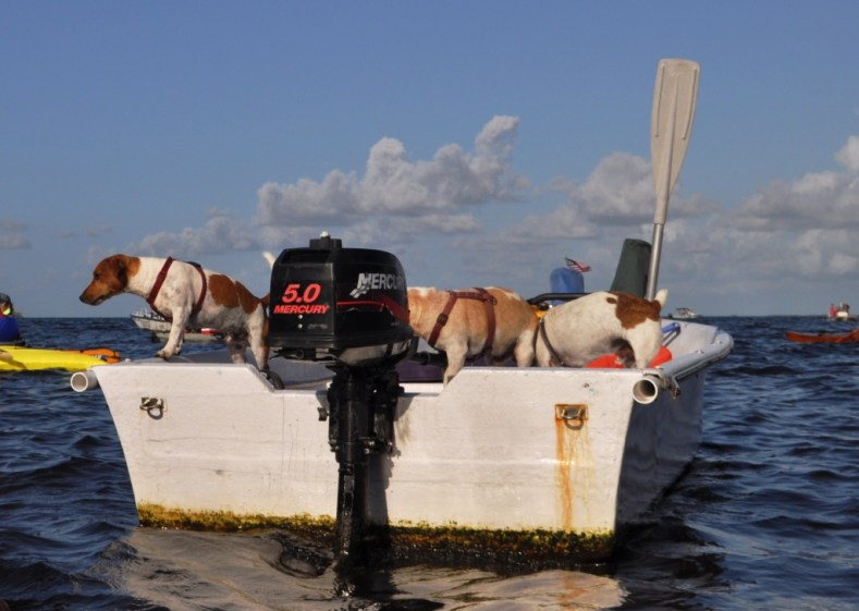 Best Way to Enjoy the Everglades Was By Boat During the Dog Days of Summer