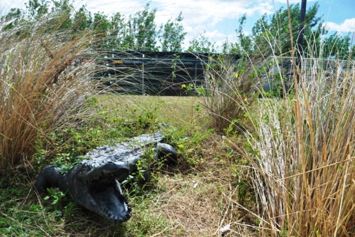 Take Time To Walk The Grounds Of The Big Cypress Swamp Welcome Center, You Never Know What You'll See