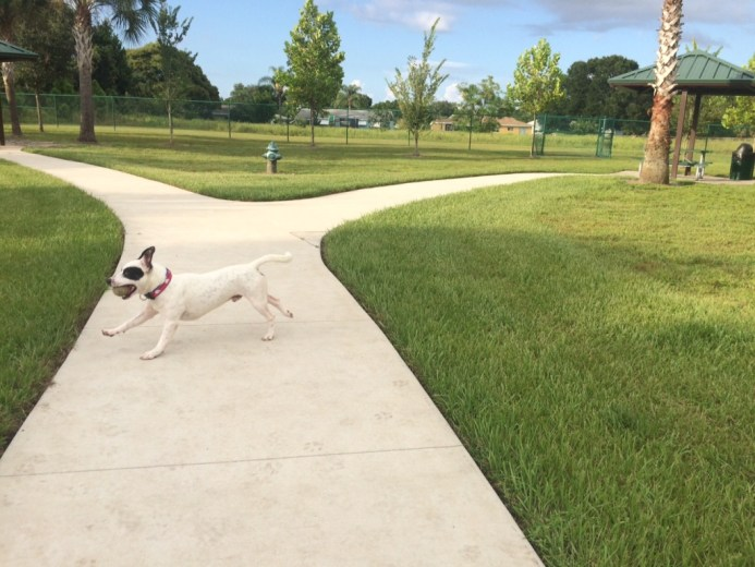 My Online Love Enjoying the North Port, Fla., Canine Club Dog Park, Aug. 2016