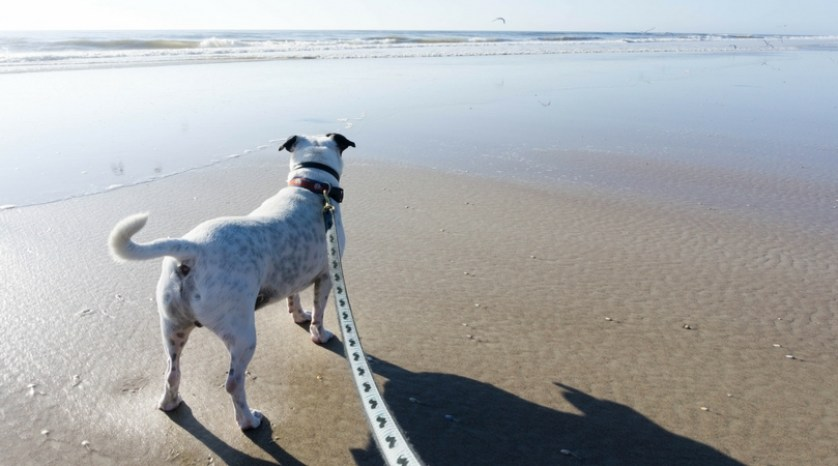 Radcliff at One of St. Augustine's Dog-Friendly Beaches