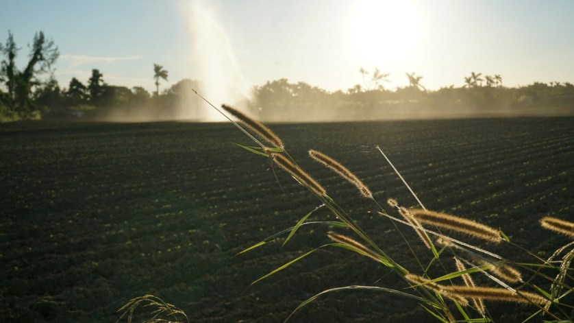 Fertilizer is Critical in Commerical Farming but it Produces Greenhouse Gases. How can it be Mitigated?