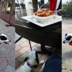 Pet-Friendly Florida: Fish, Food and Fun in Daytona Beach with a Dog