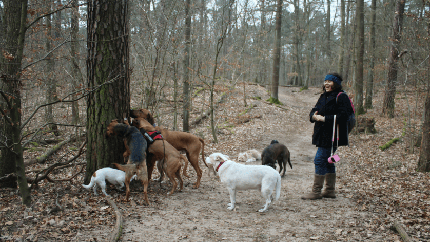 That's Me! It's Pure Joy Watching the Dogs Play During the Airbnb Experience in Berlin - Walk with the Dog-Whisperer. Thank YouThomas Dornbusch of Hunde-Mobil for the Photo and Walk!