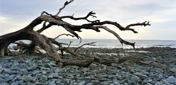 When Plans Change, Watch the Sunrise at Driftwood Beach on Jekyll Island, Georgia