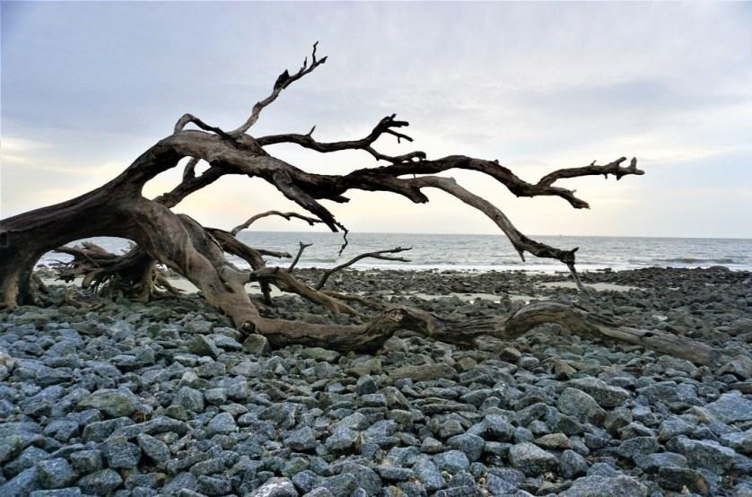 Sunrise at Driftwood Beach on Jekyll Island, Ga.