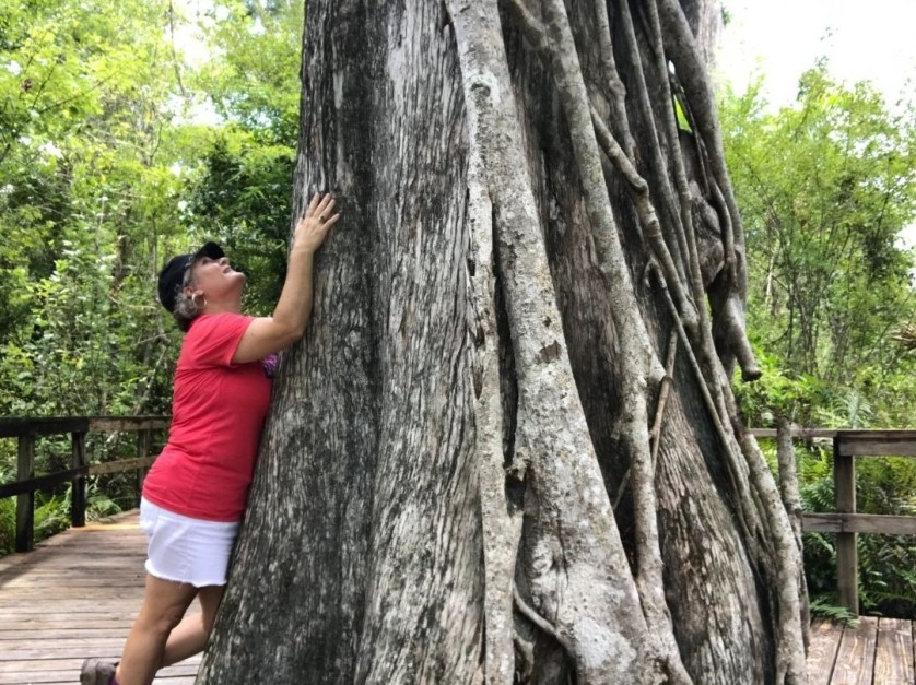 I'm a Bit of a Tree Hugger. The Cypress in Fakahatchee Strand Preserve State Park is About 200 Years Old and About 100' Tall!
