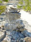 lizards use the cairns as condominiums