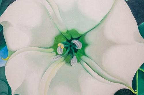 Iris blanche de Georgia O-Keeffe