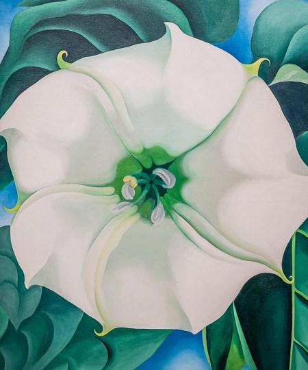 Jimson Weed/White Flower n°1, 1932