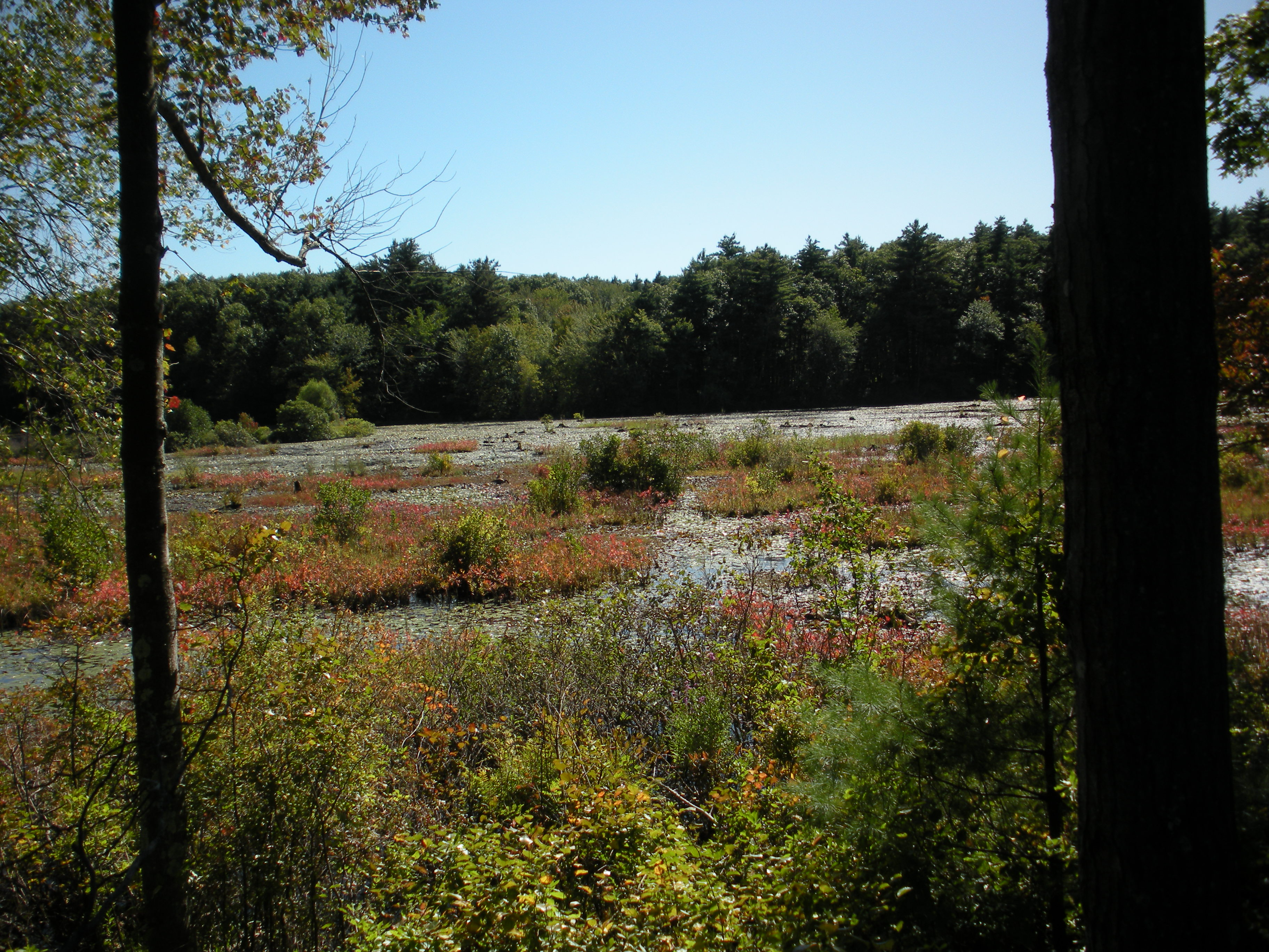 This is the view from the nature trail behind the store