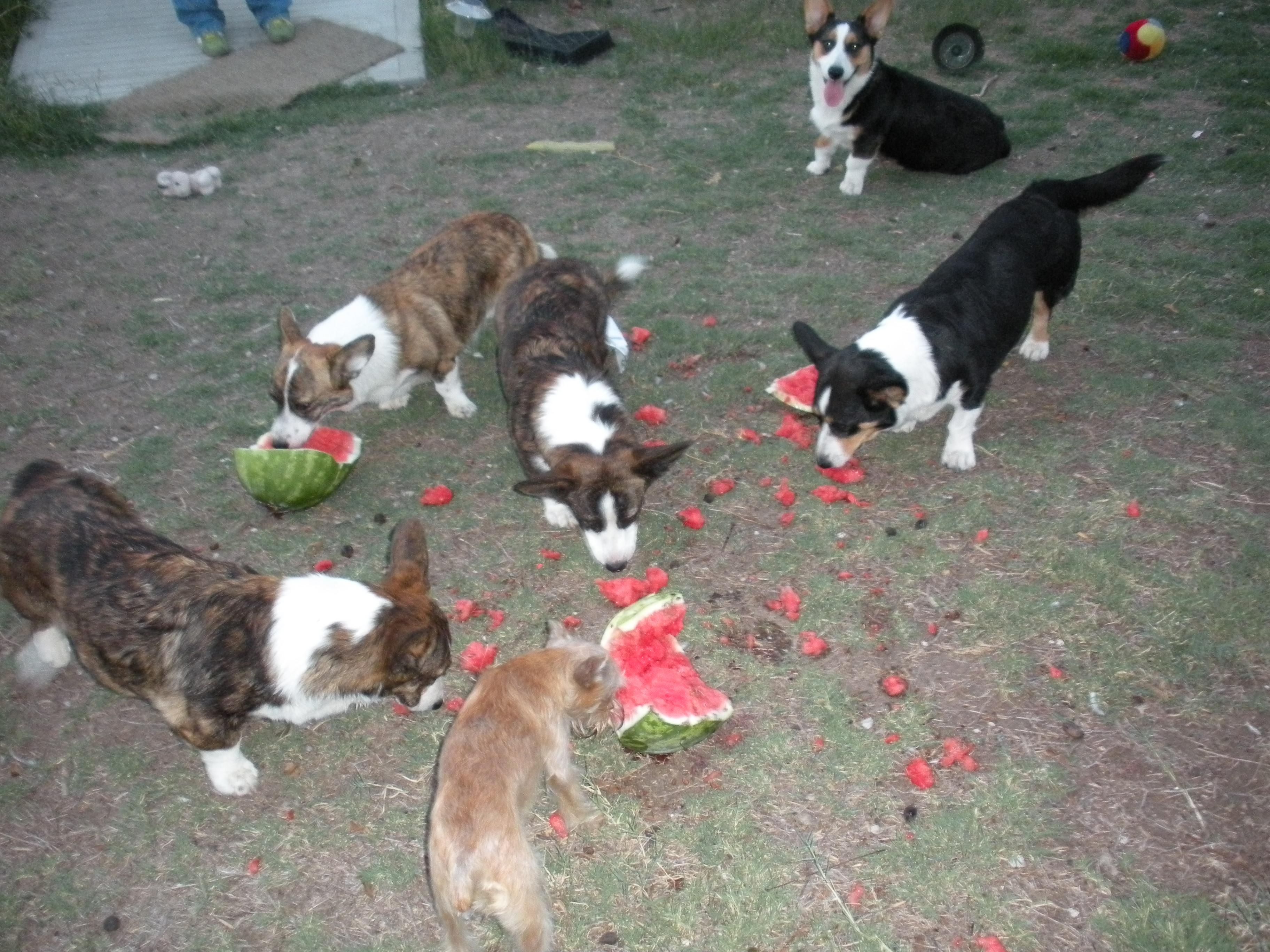 last watermelon sunday 031
