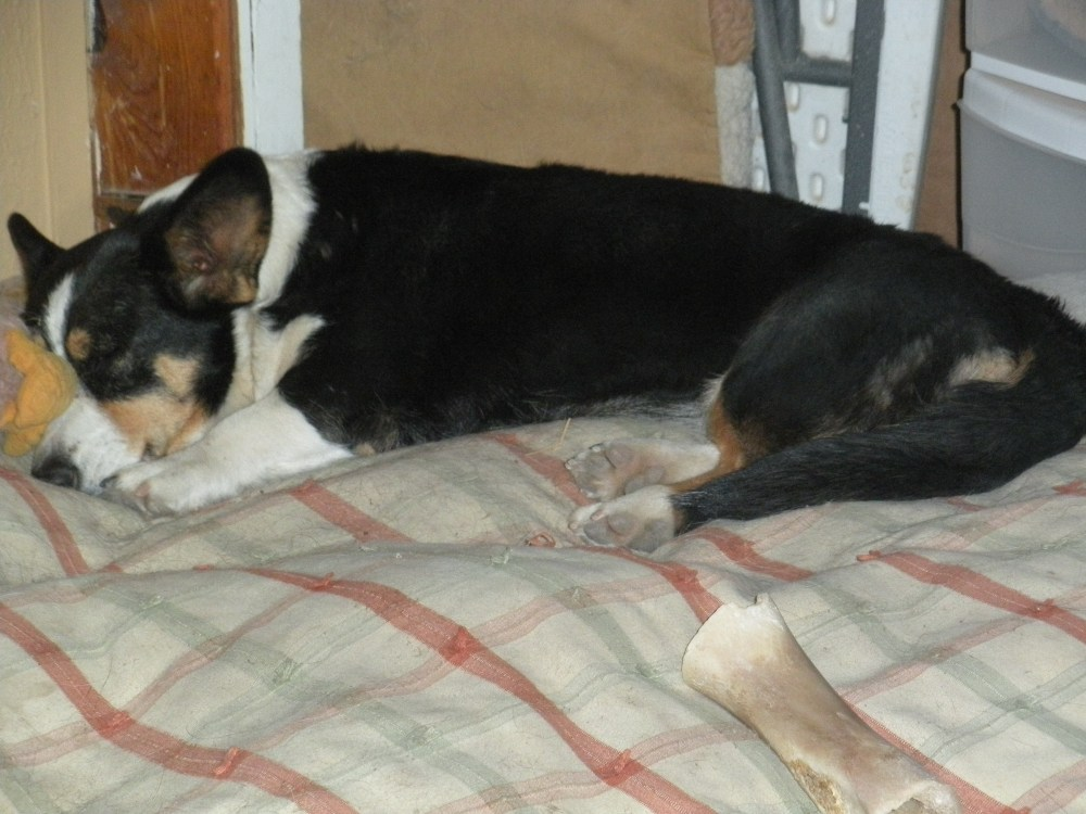 Letting Sleeping Dogs Lie (4/6)